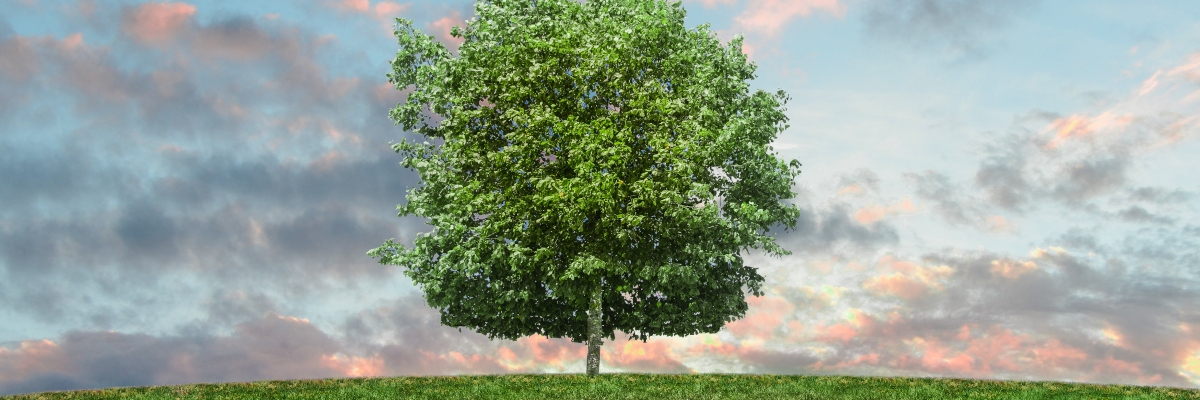 Eco-friendly Scheme