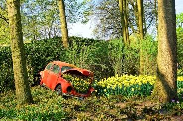 VW Beetle SORN