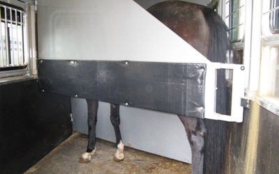 horse in a horse trailer