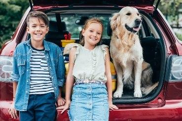 dog car travel guide