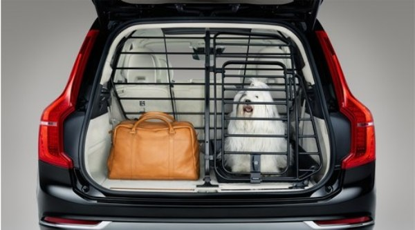 dog travelling in car